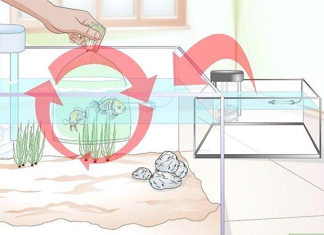 Beeld getiteld Acclimate a Fish Step 19