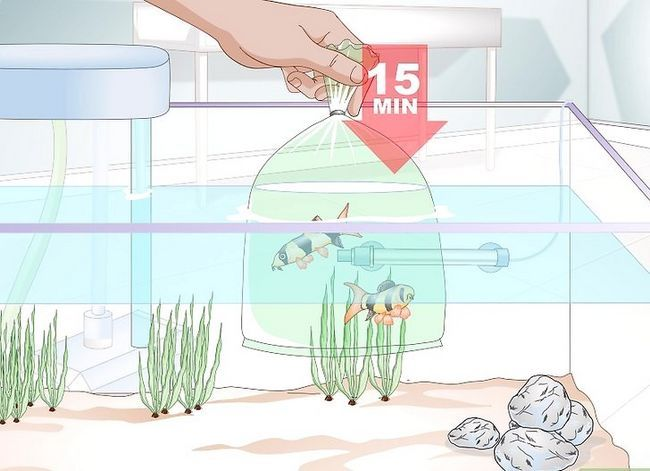 Beeld getiteld Acclimate a Fish Step 2