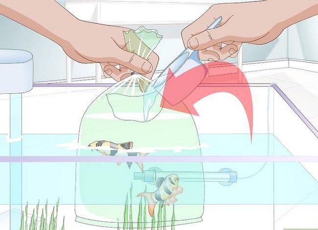 Prentjie getiteld Acclimate a Fish Step 4