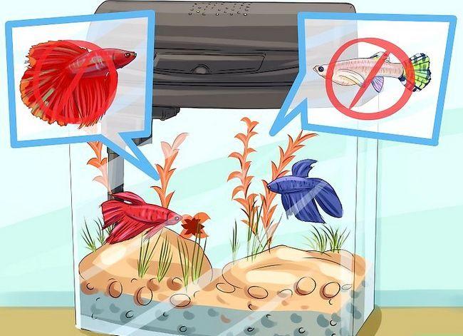 Prent getiteld Voeg nuwe tropiese vis by jou tenk Stap 1