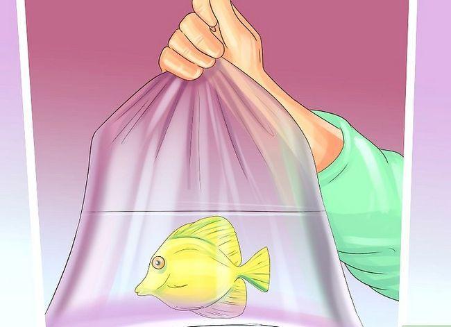 Prent getiteld Voeg nuwe tropiese vis by jou tenk Stap 2