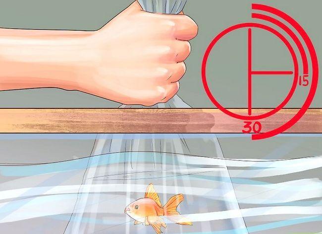 Prent getiteld Voeg nuwe tropiese vis by jou tenk Stap 3