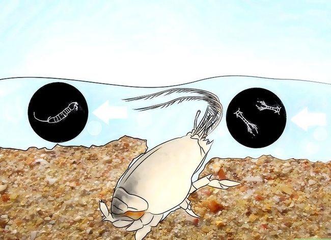 Prent getiteld Feed Sand Crabs Stap 2