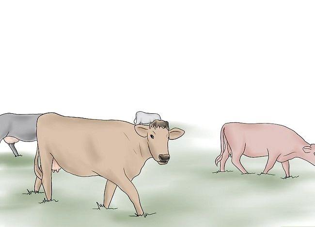 Prent getiteld Kuddebeeste Stap 1