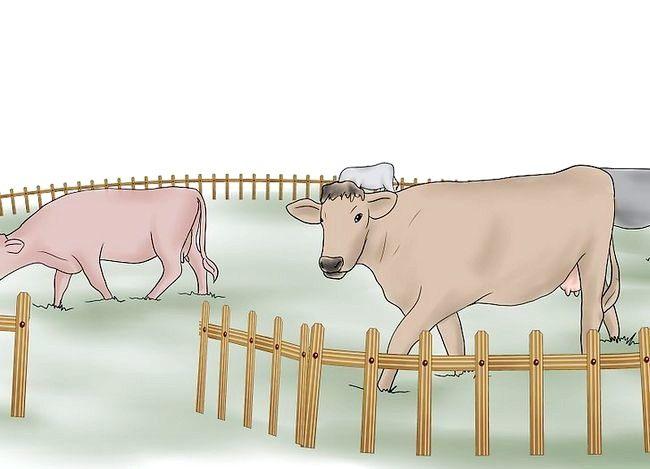 Prent getiteld Kuddebeeste Stap 4