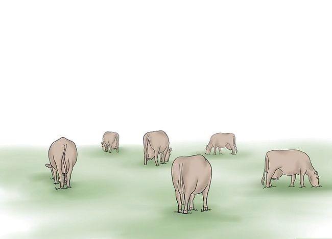Prent getiteld Kuddebeeste Stap 5