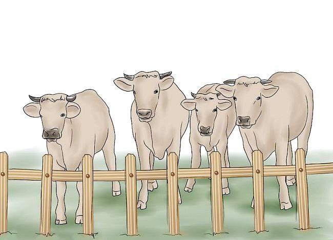 Prent getiteld Kuddebeeste Stap 7