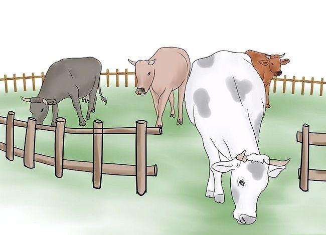 Prent getiteld Kuddebeeste Stap 9