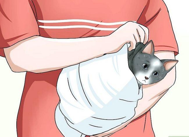 Prent getiteld Tame a Feral Cat Stap 10