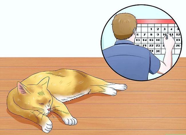 Prent getiteld Help Katte om te slaap by bedtyd Stap 1