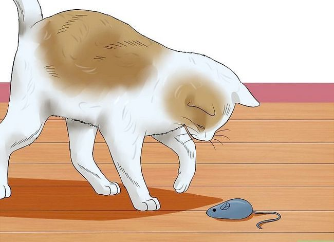 Prent getiteld Help Katte om te slaap by bedtyd Stap 5