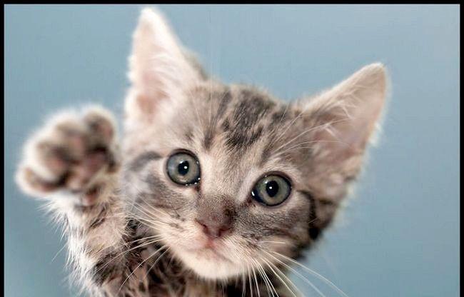 Prent getiteld Kitten!