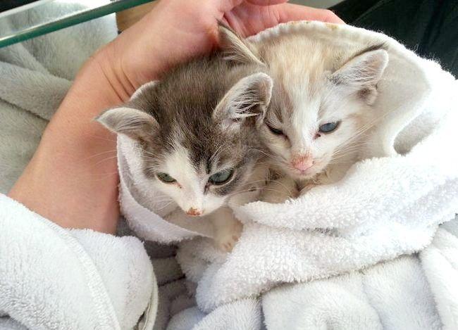 Prent getiteld Post Bath Kittens