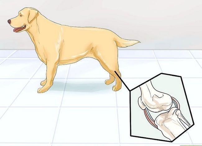 Prent getiteld Honde met gesamentlike probleme en styfheid Stap 1