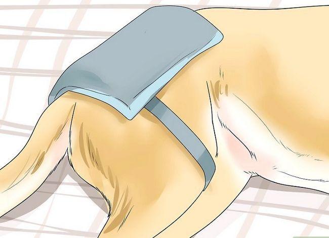 Prent getiteld Honde met gesamentlike probleme en styfheid Stap 11