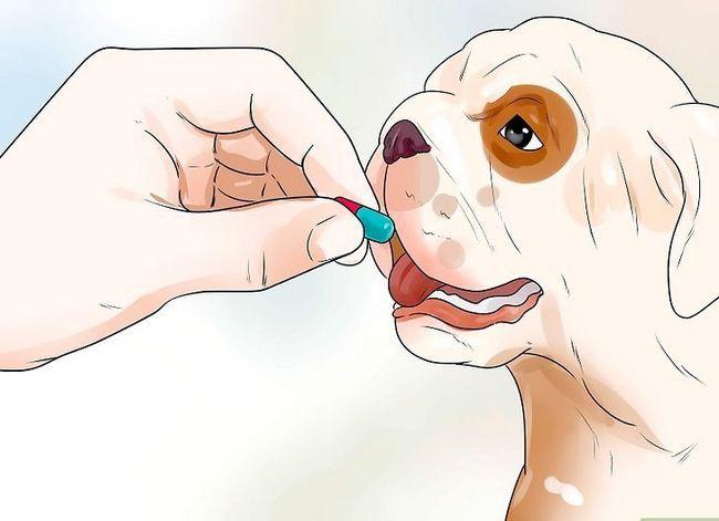Prent getiteld Help Honde met Gesamentlike Probleme en Styfheid Stap 14