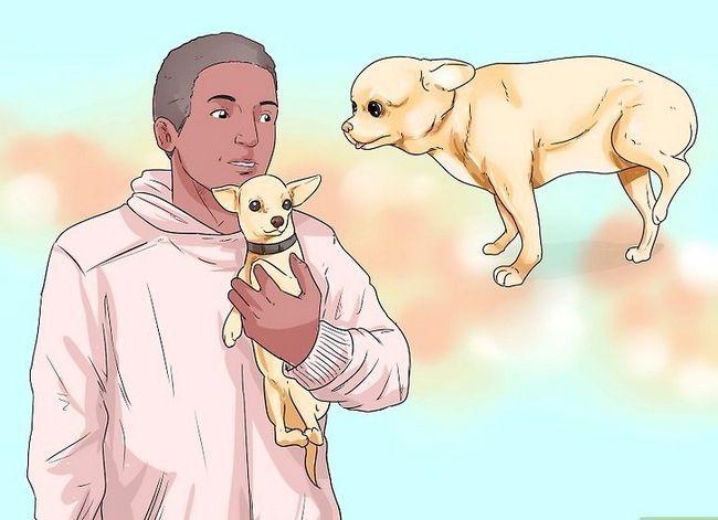 Prent getiteld Honde met gesamentlike probleme en styfheid Stap 4