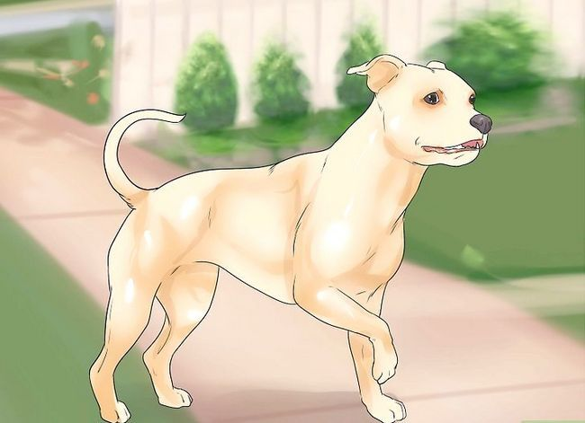 Prent getiteld Honde met gesamentlike probleme en styfheid Stap 5