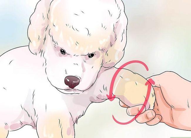 Prent getiteld Honde met gesamentlike probleme en styfheid Stap 9