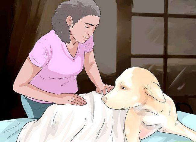 Beeld getiteld Help Honde met Gesamentlike Probleme en Styfheid Stap 10