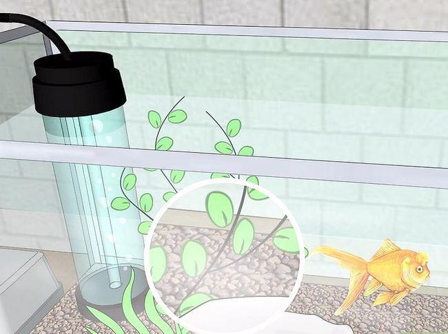 Prent getiteld Verander die water in `n vis akwarium Stap 1