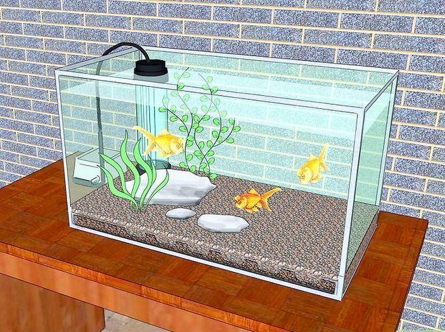 Prent getiteld Verander die water in `n vis akwarium inleiding