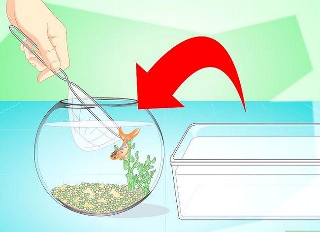 Prent getiteld Verander die water in `n Visbak Stap 13