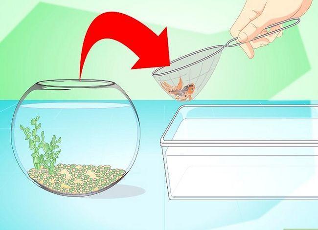 Prent getiteld Verander die water in `n Visbak Stap 4