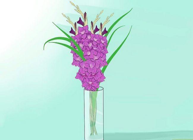 Prent getiteld Sny Gladiolus Stap 2