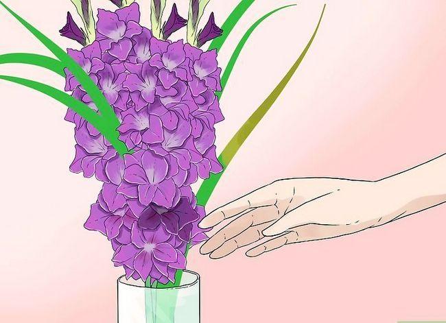 Prent getiteld Sny Gladiolus Stap 5