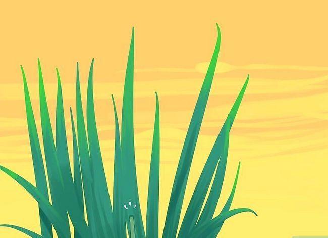 Prent getiteld Sny Gladiolus Stap 8