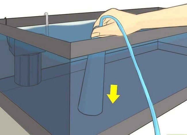 Prent getiteld Raise Brine Shrimp Step 15