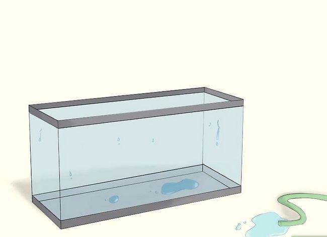 Prent getiteld Raise Brine Shrimp Step 3