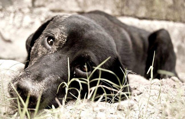 Prent getiteld Lonely Dog 1