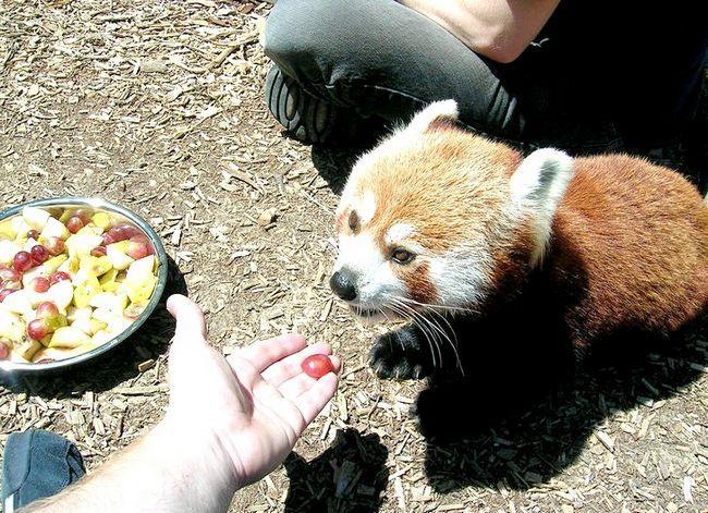 Beeld getiteld Voer die Firefoxes