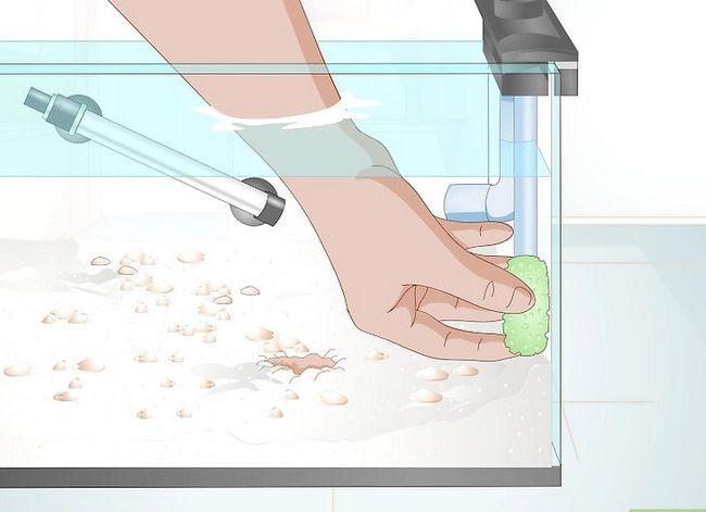 Prent getiteld Sorg vir `n Fantail Goldfish Stap 3