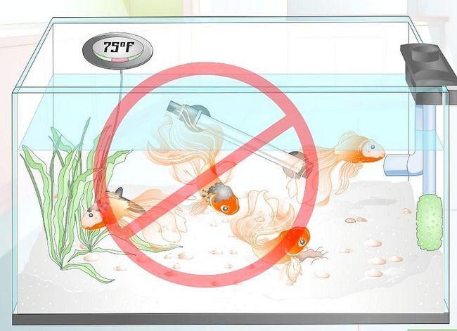 Prent getiteld Sorg vir `n Fantail Goldfish Stap 9
