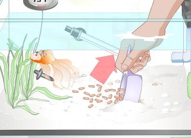 Prent getiteld Sorg vir `n Fantail Goldfish Stap 11