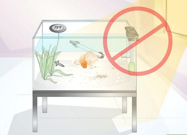 Prent getiteld Sorg vir `n Fantail Goldfish Stap 12