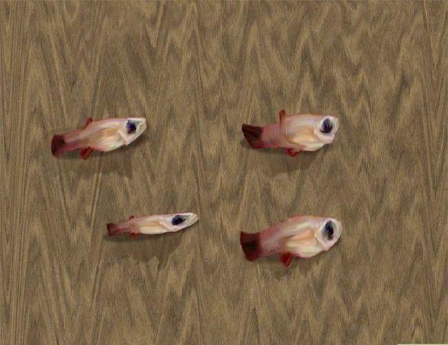 Prent getiteld Verhoog goudvisbraai Stap 3