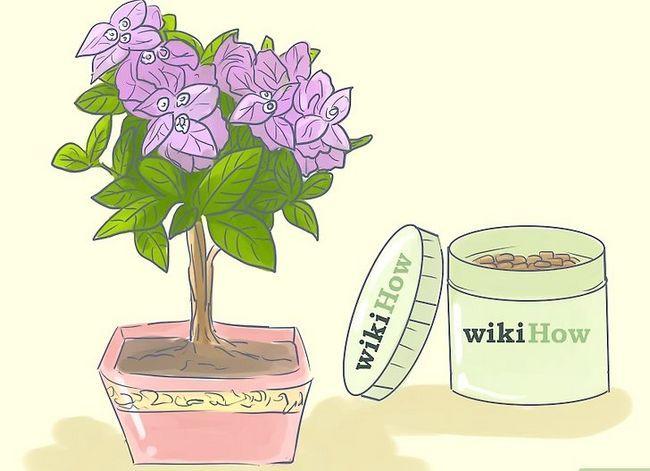Prent getiteld Sorg vir Tropiese Blomme Stap 11