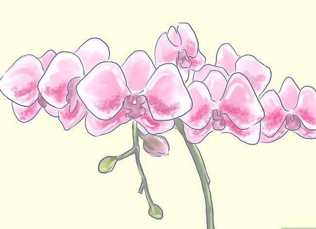 Prent getiteld Sorg vir Tropiese Blomme Stap 12