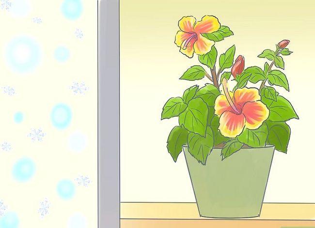 Prent getiteld Sorg vir Tropiese Blomme Stap 14