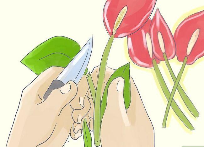 Prent getiteld Sorg vir Tropiese Blomme Stap 2