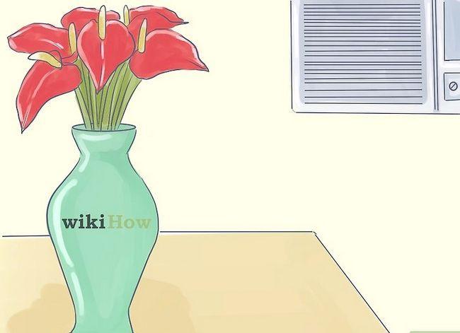 Prent getiteld Sorg vir Tropiese Blomme Stap 4