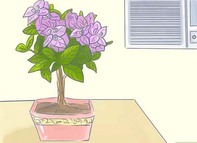 Prent getiteld Sorg vir Tropiese Blomme Stap 6
