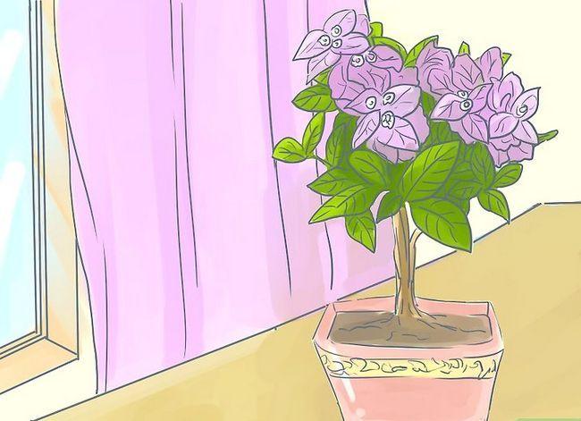 Prent getiteld Sorg vir Tropiese Blomme Stap 7