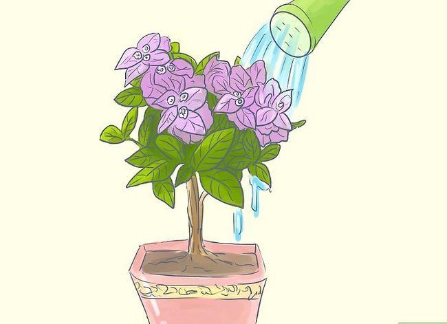 Prent getiteld Sorg vir Tropiese Blomme Stap 8