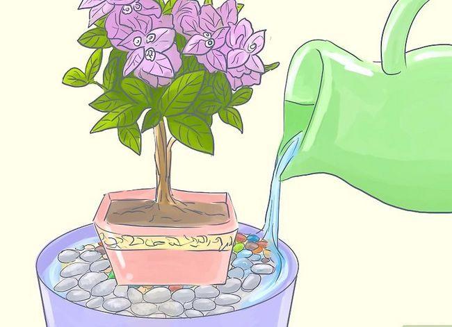Prent getiteld Sorg vir Tropiese Blomme Stap 9