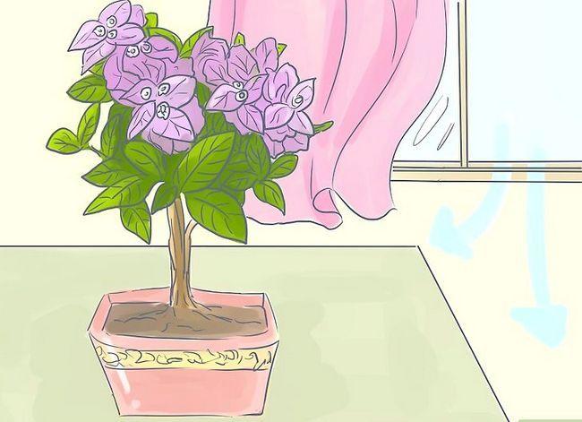 Prent getiteld Sorg vir Tropiese Blomme Stap 10